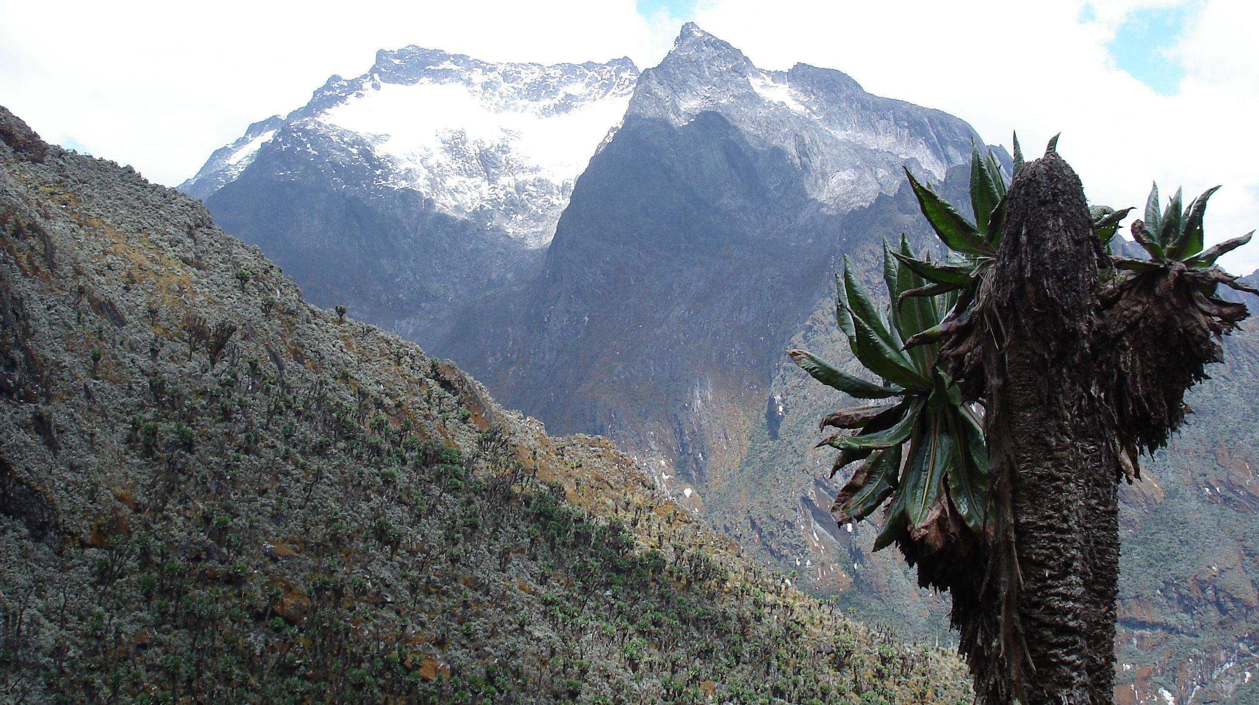 Mt.Speke2008
